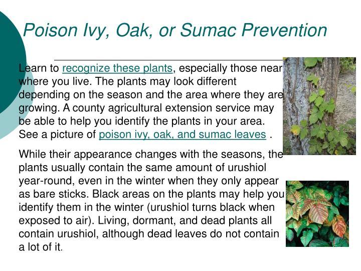 Poison Ivy, Oak, or Sumac Prevention