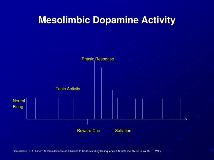 Mesolimbic Dopamine Activity