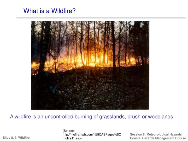 What is a Wildfire?