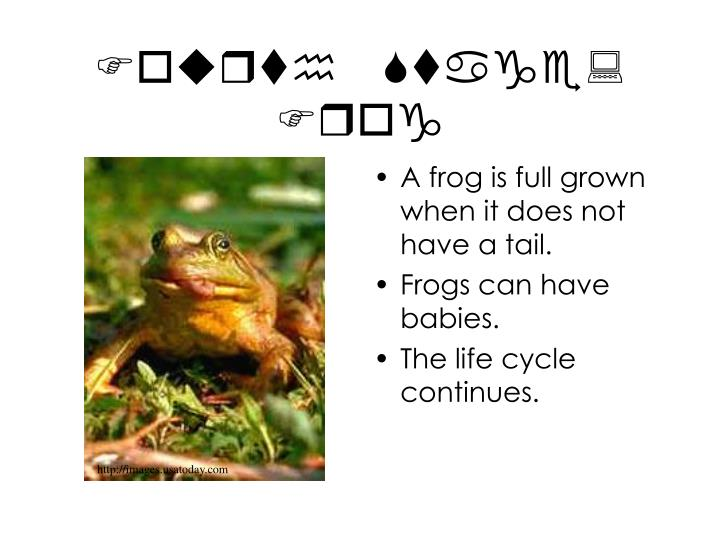 Fourth Stage: Frog