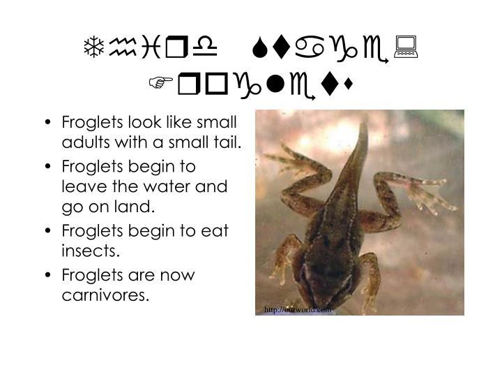 Third Stage: Froglets