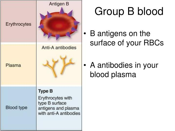 Group B blood
