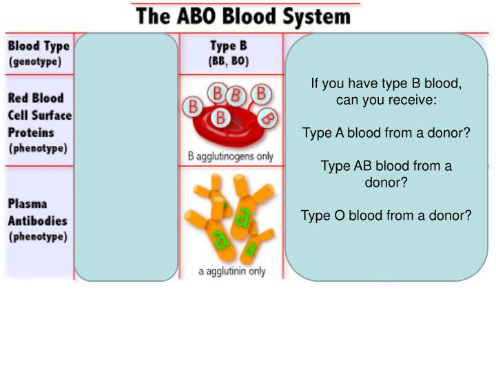 If you have type B blood, can you receive:
