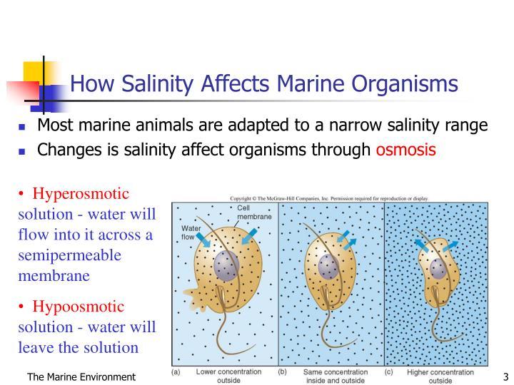 How Salinity Affects Marine Organisms