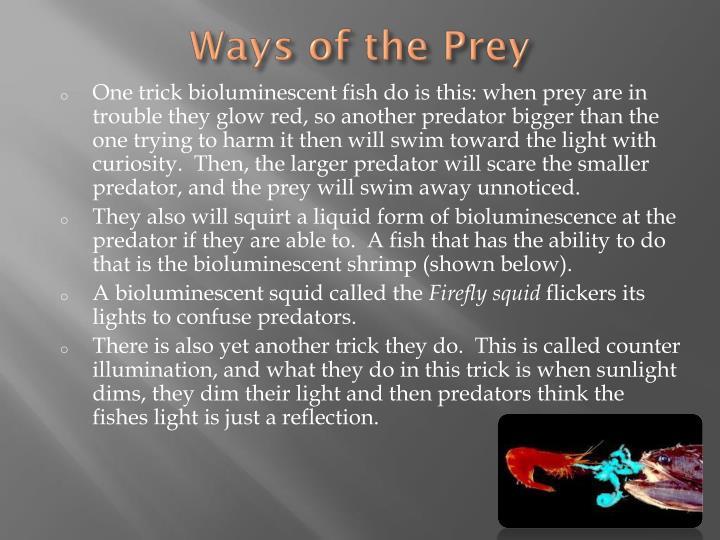 Ways of the Prey