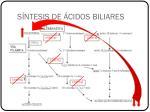 s ntesis de cidos biliares2