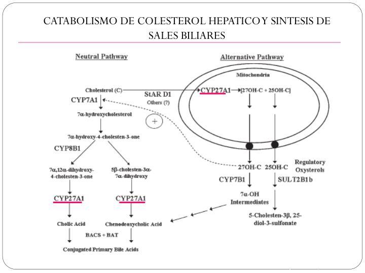 CATABOLISMO DE COLESTEROL HEPATICO Y SINTESIS DE SALES BILIARES