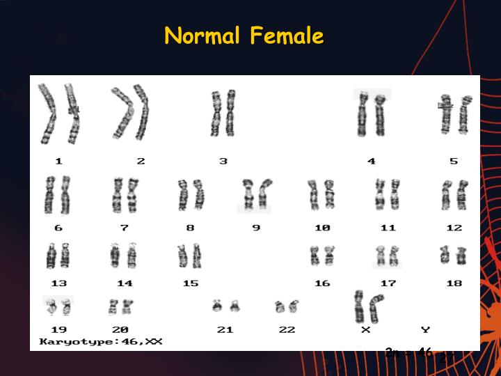 Normal Female