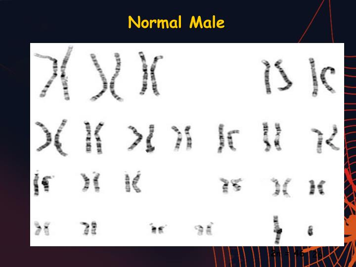 Normal Male