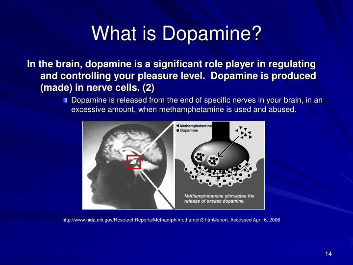 In the brain, dopamine is a significant role player in regulating and controlling your pleasure level.  Dopamine is produced (made) in nerve cells. (2)