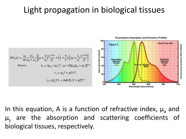 Light propagation in biological