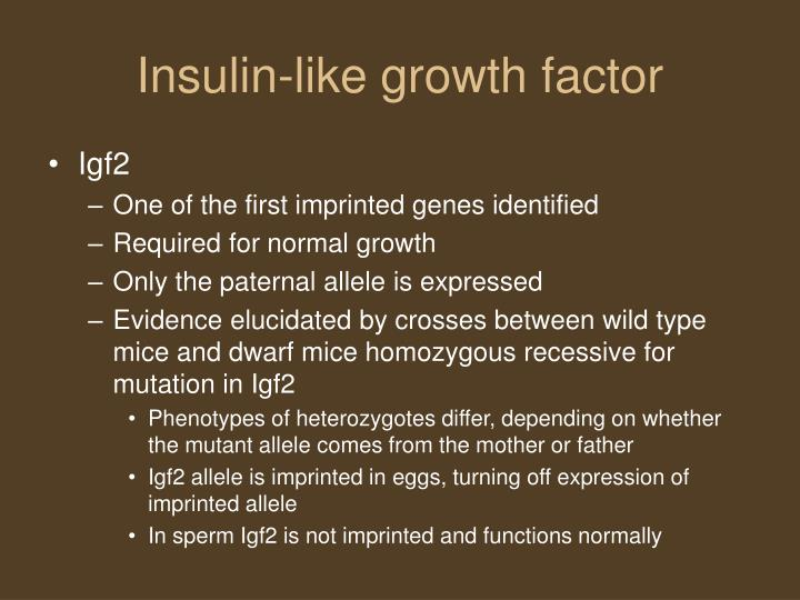 Insulin-like growth factor