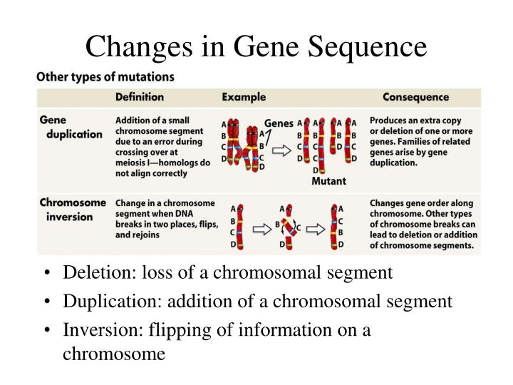 Changes in Gene Sequence