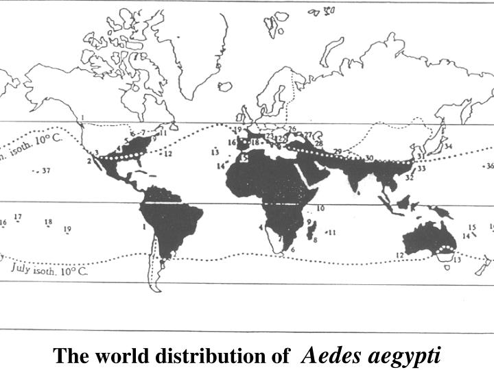 The world distribution of