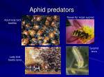 aphid predators