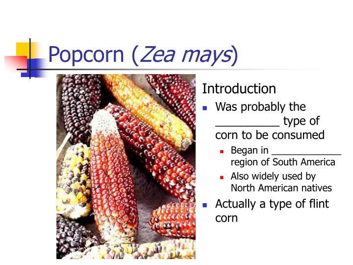 Popcorn (