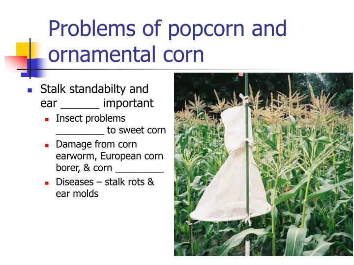 Problems of popcorn and ornamental corn