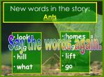 new words in the story ants