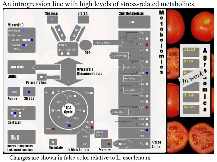 An introgression line with high levels of stress-related metabolites