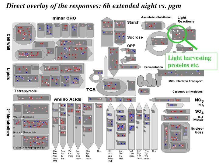 Light harvesting proteins etc