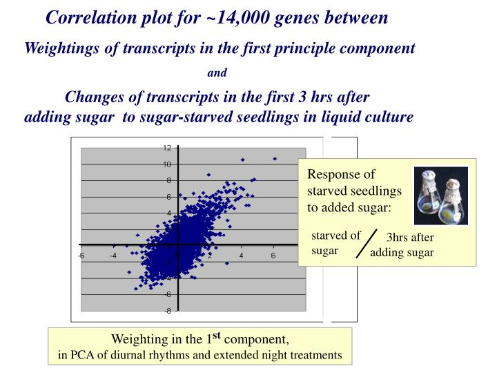 Response of starved seedlings to added sugar: