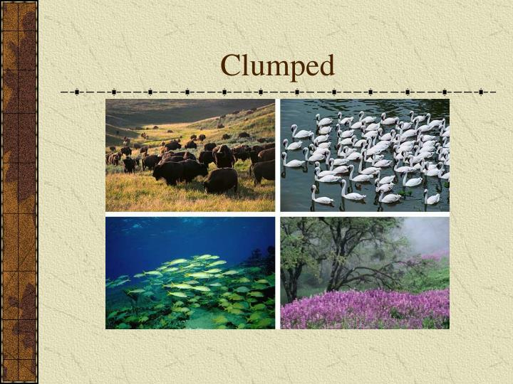 Clumped