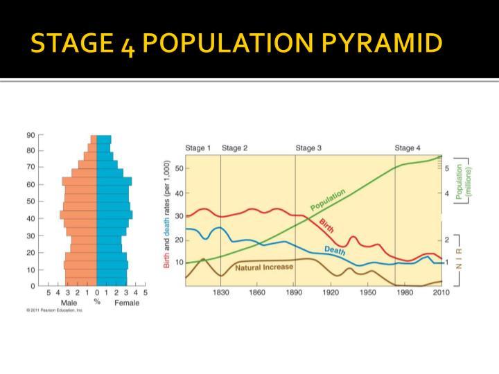STAGE 4 POPULATION PYRAMID