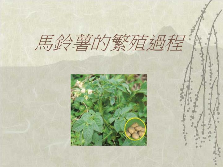 馬鈴薯的繁殖過程