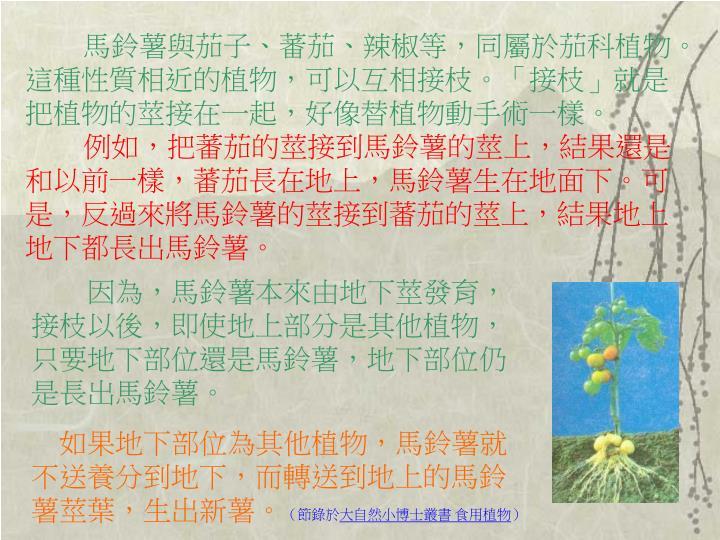 馬鈴薯與茄子、蕃茄、辣椒等,同屬於茄科植物。這種性質相近的植物,可以互相接枝。「接枝」就是把植物的莖接在一起,好像替植物動手術一樣。