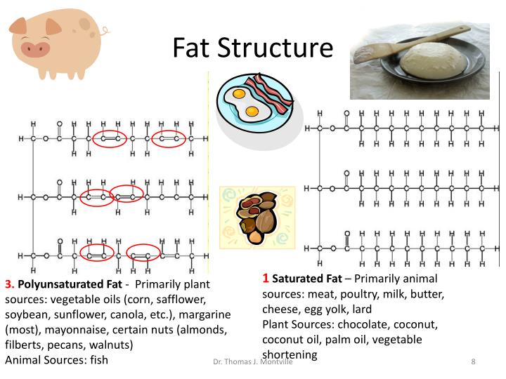 Fat Structure