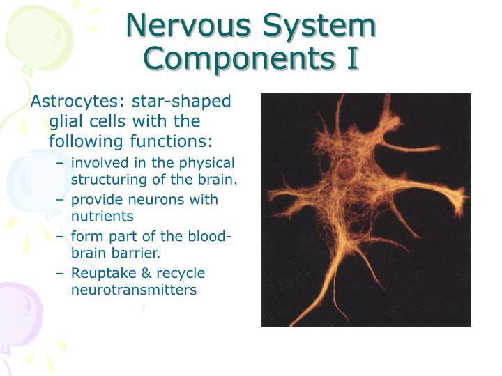 Nervous System Components I