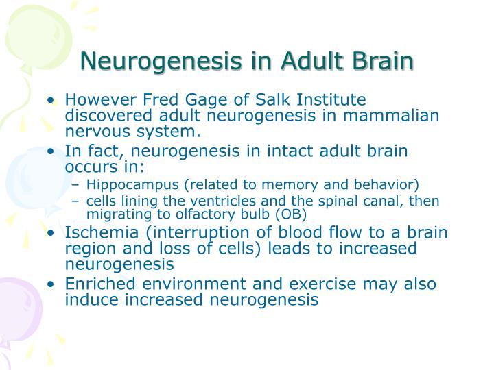 Neurogenesis in Adult Brain