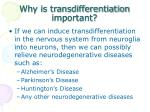 why is transdifferentiation important
