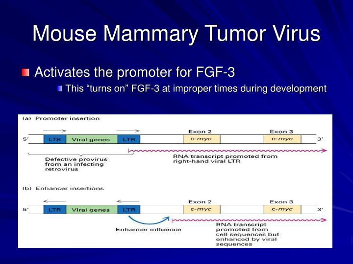 Mouse Mammary Tumor Virus