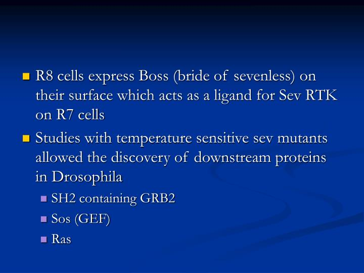 R8 cells express Boss (bride of sevenless) on their surface which acts as a ligand for Sev RTK on R7 cells