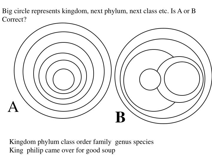 Big circle represents kingdom, next phylum, next class etc. Is A or B