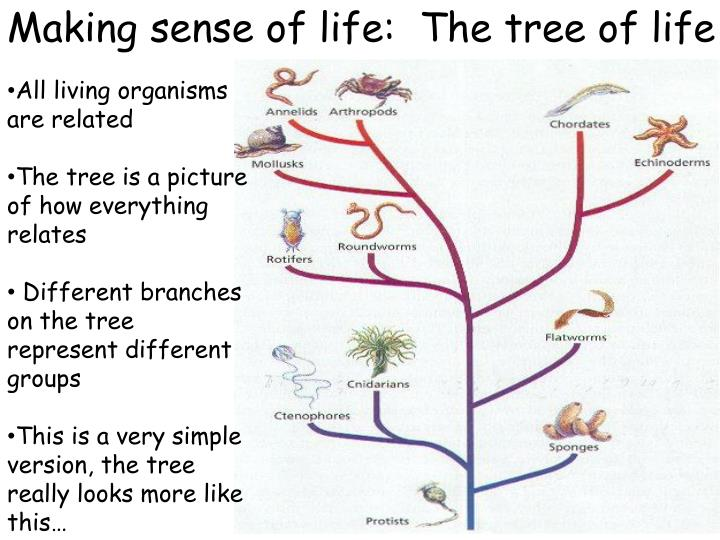 Making sense of life:  The tree of life
