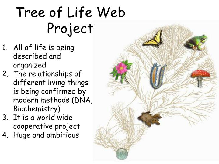 Tree of Life Web Project