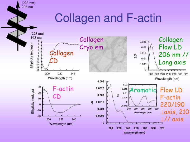 Collagen and F-actin