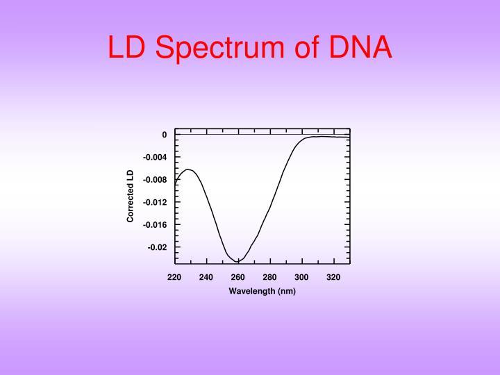 LD Spectrum of DNA