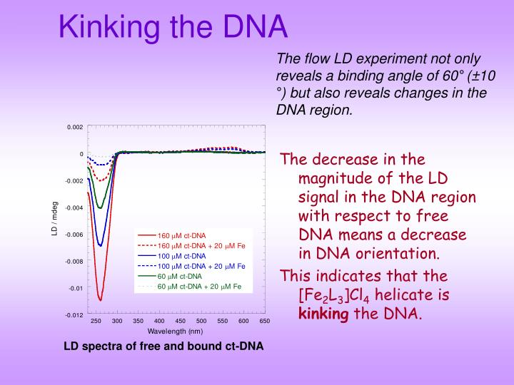 Kinking the DNA