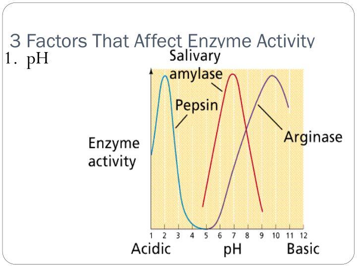 3 Factors That Affect Enzyme Activity