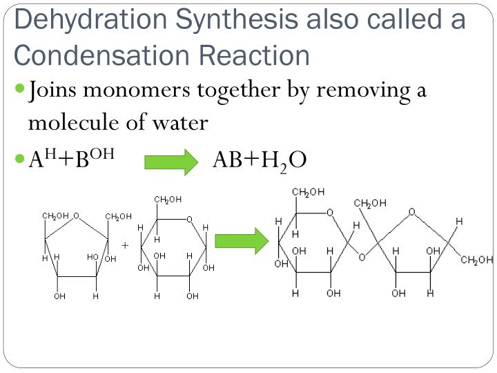 Dehydration Synthesis also called a Condensation Reaction