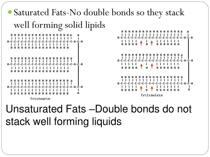 Saturated Fats-No double bonds so they stack well forming solid lipids