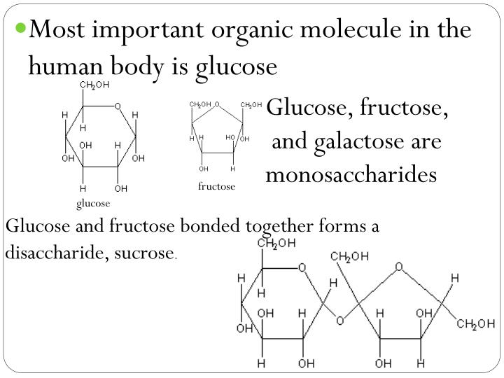 Most important organic molecule in the human body is glucose