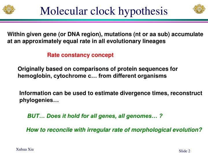Molecular clock hypothesis