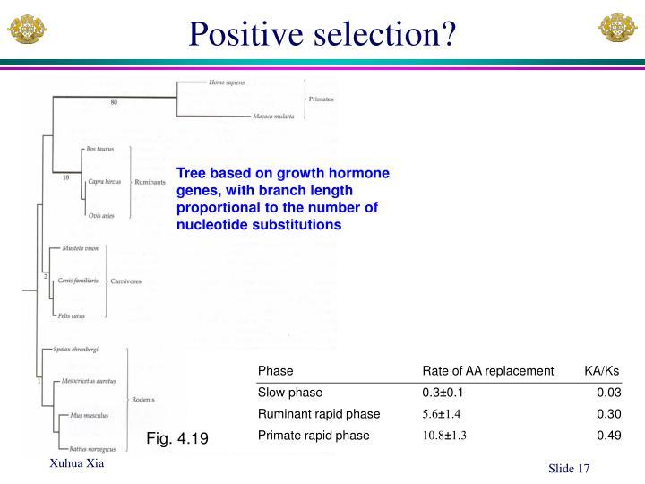 Positive selection?