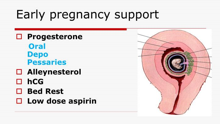 Early pregnancy support