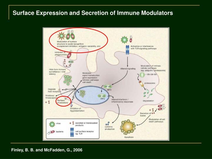 Surface Expression and Secretion of Immune Modulators