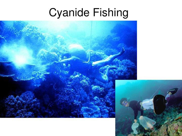 Cyanide Fishing